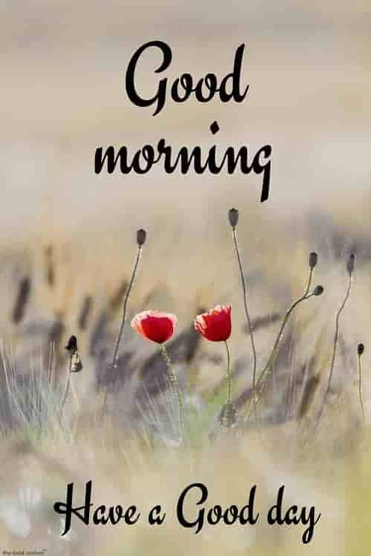 45 Good Morning Quotes Images To Make Your Happiest Day 21
