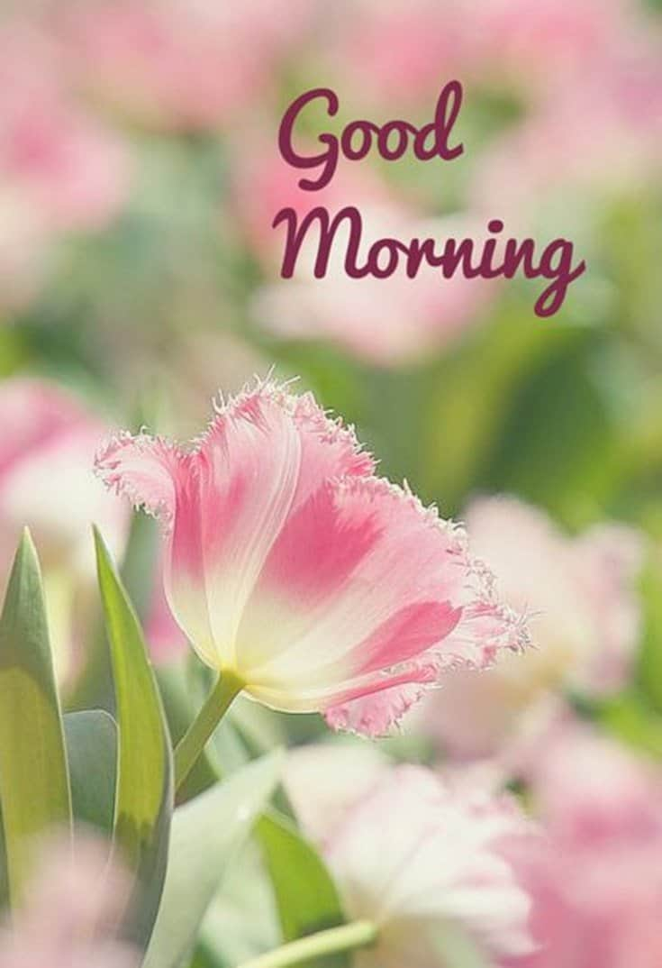 45 Good Morning Quotes Images To Make Your Happiest Day 8