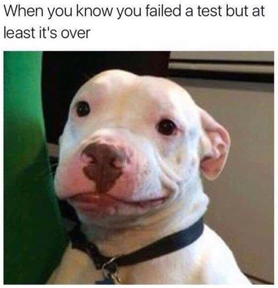27 Funny Animal Memes To Make You Laugh Till You Drop 21
