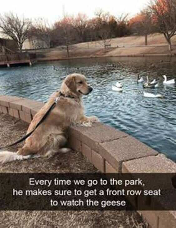 27 Funny Animal Memes To Make You Laugh Till You Drop 22