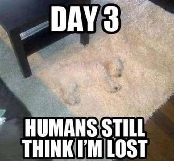 27 Funny Animal Memes To Make You Laugh Till You Drop 23