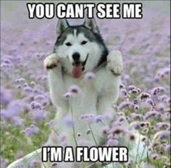 27 Funny Animal Memes To Make You Laugh Till You Drop 27