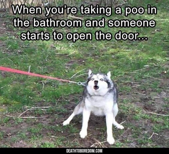 27 Funny Animal Memes To Make You Laugh Till You Drop 5