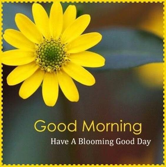 37 Good Morning Greetings Pictures And Wishes With Beautiful Images 1