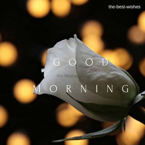 37 Good Morning Greetings Pictures And Wishes With Beautiful Images 17