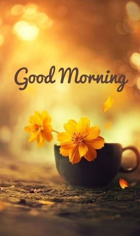 42 Good Morning Quotes Pictures And Wishes With Beautiful Images Funzumo