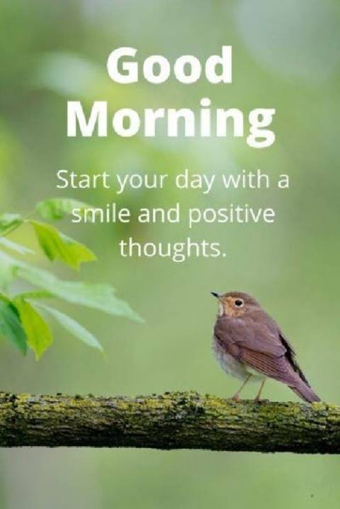 42 Good Morning Quotes Pictures And Wishes With Beautiful Images 21