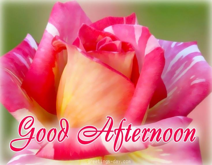 28 Best Good Afternoon Wishes images 22