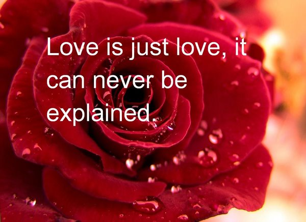 The Best 35 Happy Valentine's Day Quotes 19