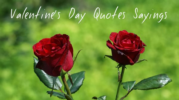 The Best 35 Happy Valentine's Day Quotes 31