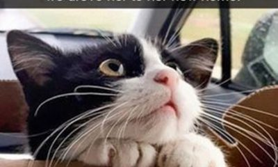Funny Animal Pictures Quotes with Images 1