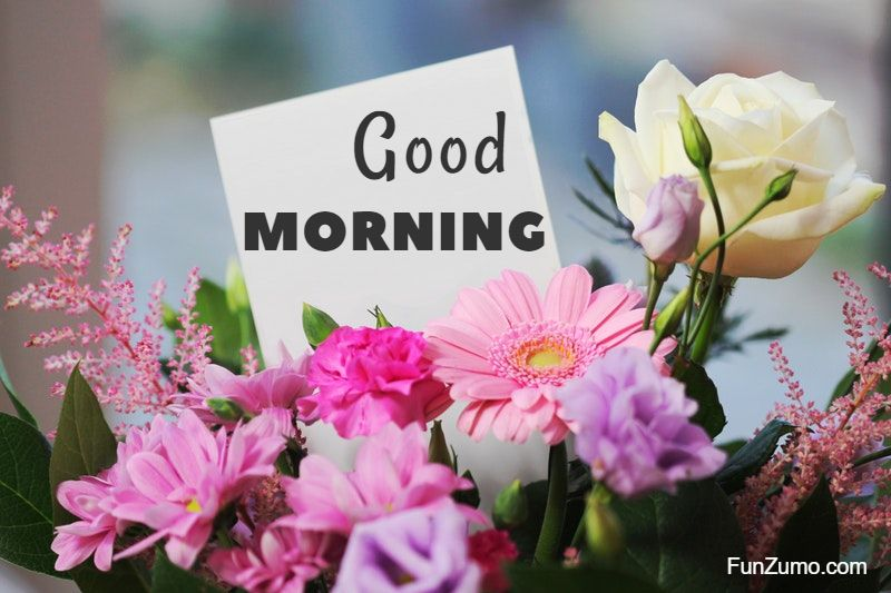 35 best good morning flowers images