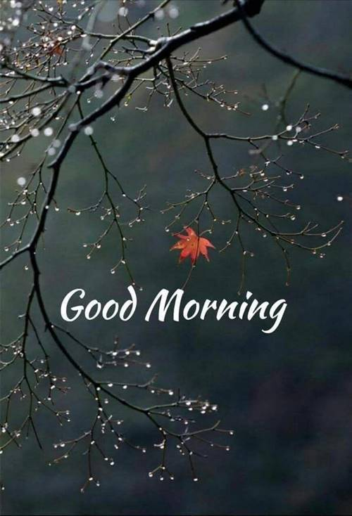 Good Morning Messages For Love And Wishes With Beautiful Images 2