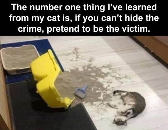 """Top 55 Hilarious Funny Memes Of All Time - Funny Hilarious Memes """"The number one thing I've learned from my cat is, if you can't hide the crime, pretend to be the victim."""""""