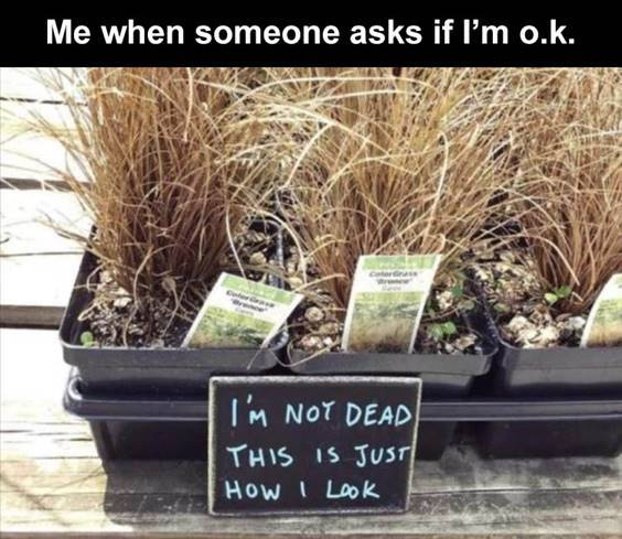 """Top 55 Hilarious Funny Memes Of All Time - Top Funny Memes """"Me when someone asks if I'm o.k. I'm not dead this is just how I look"""""""