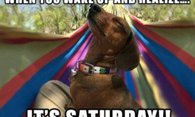 funny saturday memes to get you through week