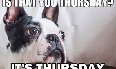 funny thursday memes to get you through week