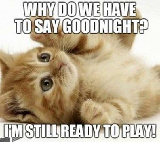 funny good night images and quotes