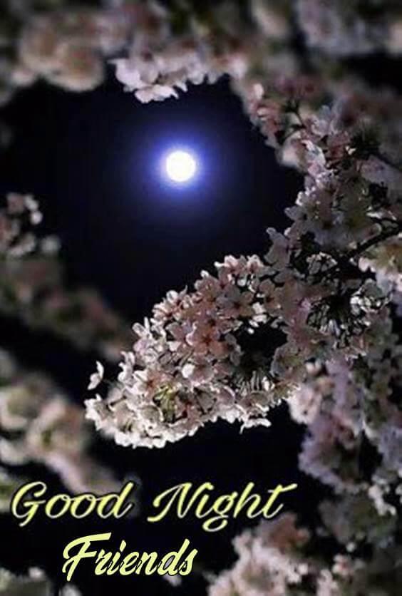 good night bestie