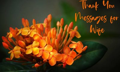 Heartfelt Thank You Messages for Wife – Appreciation Quotes about Thank You