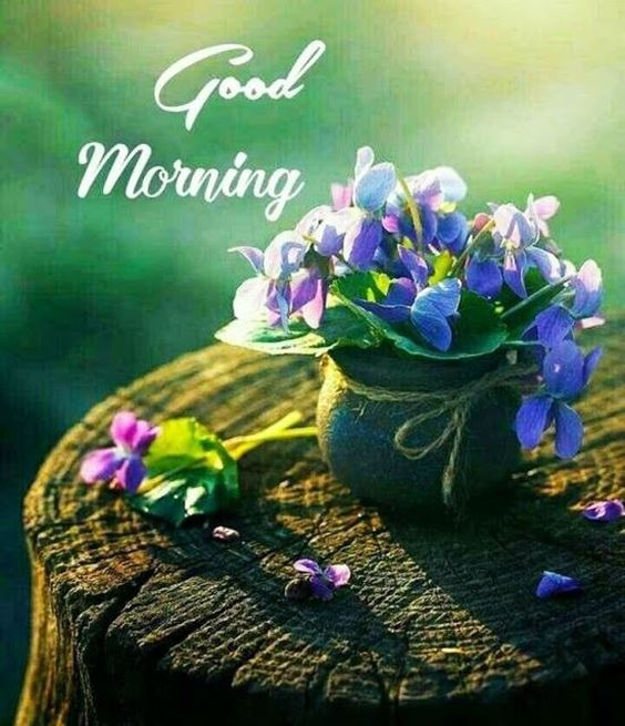 good morning pic New Good Morning Images With wishes Pictures And Quotes Positive Energy