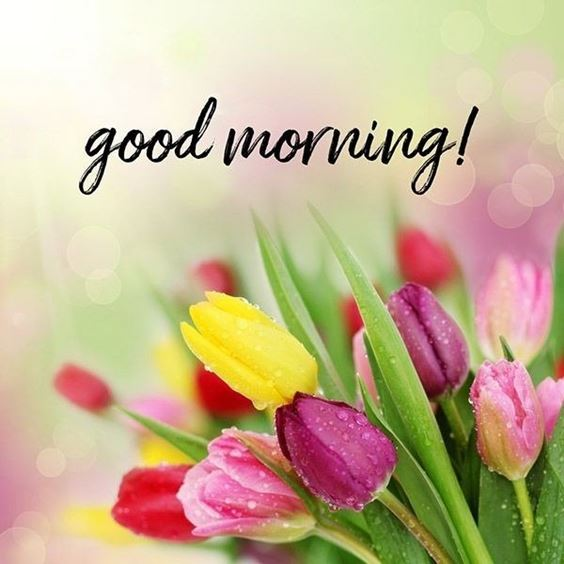 good morning pics New Good Morning Images With wishes Pictures And Quotes Positive Energy