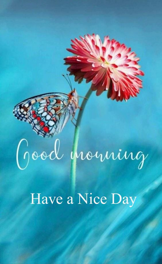 image of good morning New Good Morning Images With wishes Pictures And Quotes Positive Energy